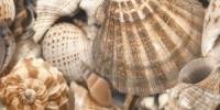 Керамическая плитка Голден Тайл Си Бриз декор тип 3