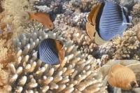 Керамическая плитка Голден Тайл Агат декор тип 2