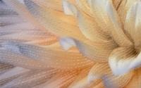 Керамическая плитка Голден Тайл Фиори декор тип 2