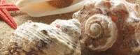Керамическая плитка Керамин Сиерра декор ракушки тип 4