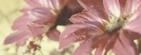 Керамическая плитка Керамин Сиерра декор цветы тип 1