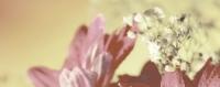 Керамическая плитка Керамин Сиерра декор цветы тип 2
