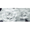 Керамическая плитка Церсанит Вэйв декор роза