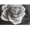 Керамическая плитка Керамин Монро декор тип1